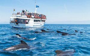 avistaqmiento de cetaceos en tarifa