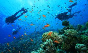 submarinismo deporte en tarifa