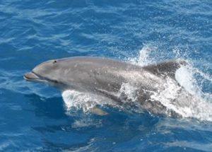 casas de alquiler en tarifa delfines