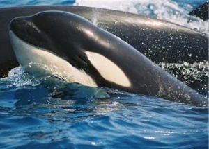 alquiler de casas en tarifa orcas