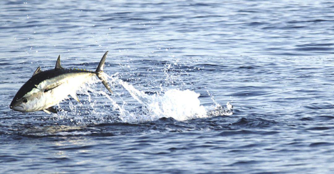 Ruta del atún Tarifa